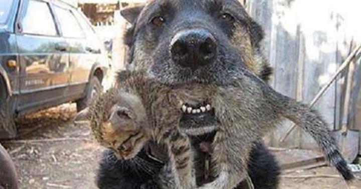 Героический поступок собаки